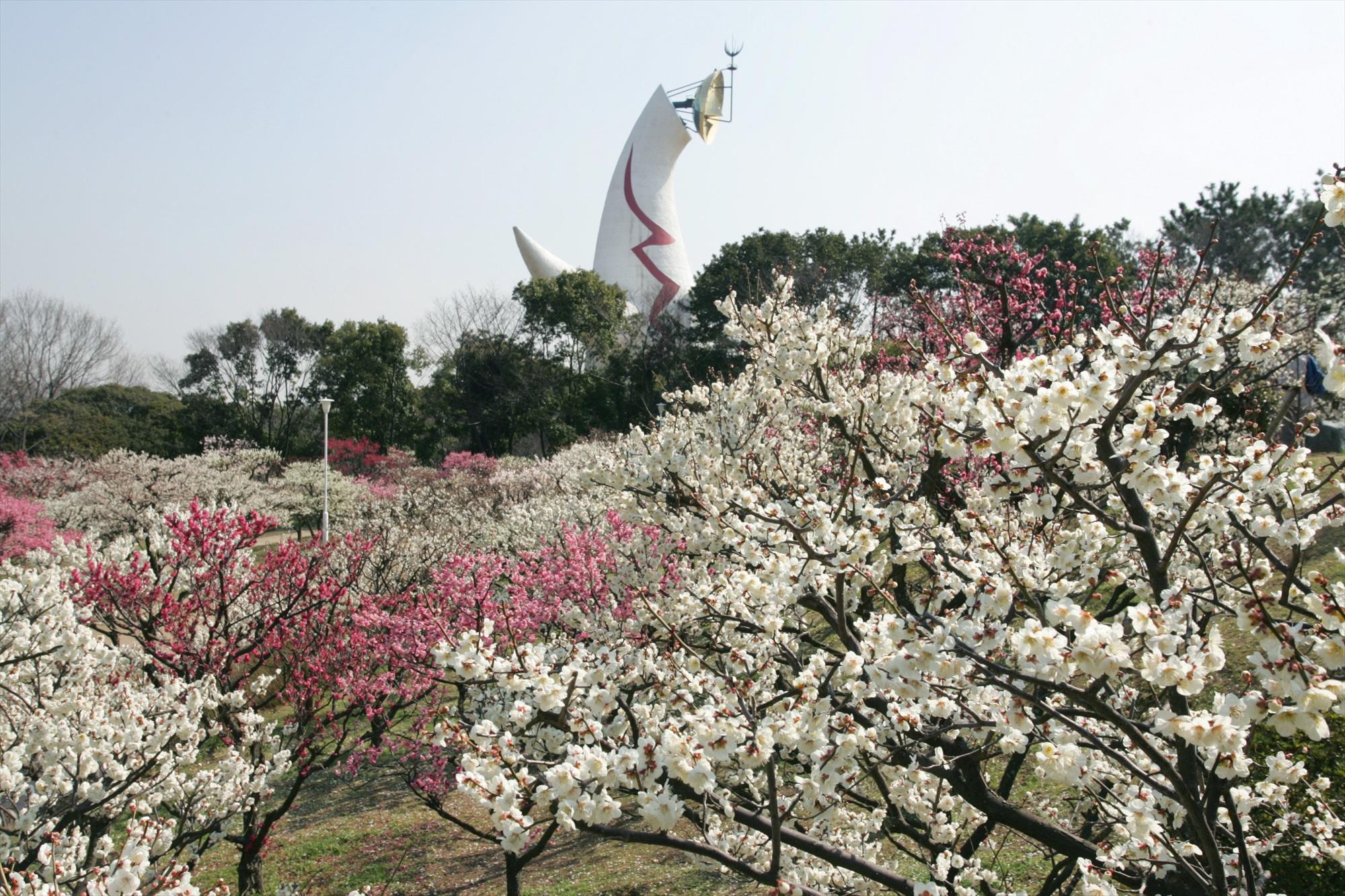 自然文化園_梅林.JPG